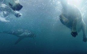 Folksam Commercial: Diving Dogs