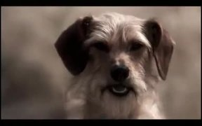 Adopt A Pet Campaign – The Shelter Pet Project