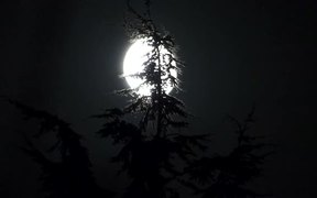 Full Moon and Pine