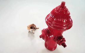 Pedigree Video: Small Dog, Big Bone