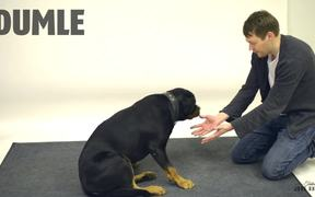 Jose Ahonen Performs Magic for Dogs