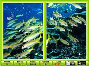 Underwater Similarities