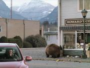 Honey Badger Narrates Bears LOVE Chobani