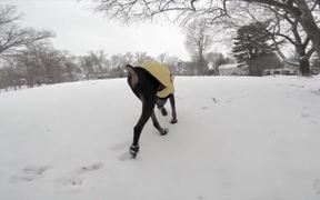 GoPro Campaign: Doberman Chases A Squirrel