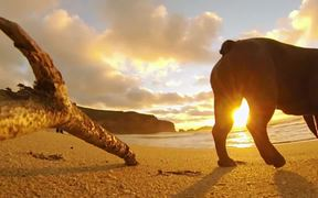 GoPro Campaign: Chicken The Dog