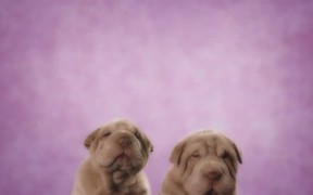 Pedigree Commercial: Share for Dogs