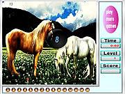 Fantastic horses hidden numbers