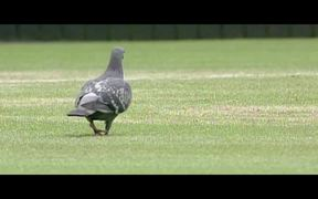 Stella Artois Commercial: Rufus The Real Hawk-Eye