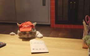 Pizza Hut Campaign: Don't Get Cute With Us
