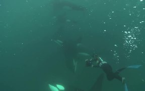 Woman is Swimming with Wild Orcas