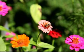 Bee on Fower