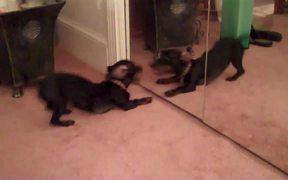 The Dog Mirror Test