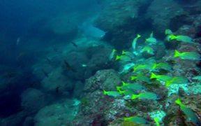 Cocos Island Dive Trip 2014