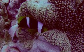 Pretty Reefs of Palau