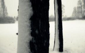 Snow and Gorgeous Winter Landscape