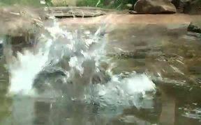 Cat Catches Living Fish