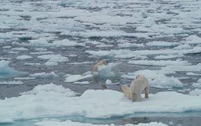 To The Arctic - Polar Bear Family Featurette