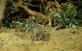 Meerkats in Moscow Zoo