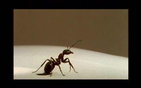 La Fourmi (The Ant)