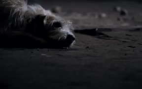 Pedigree Adoption Commercial: Charlie's Story