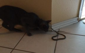 Kitty Cat Vs Snake