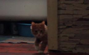 Cat Life #1