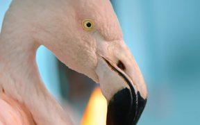 Chambord: Because No Reason Flamingo