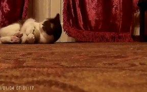 Cat Music Playing Ball